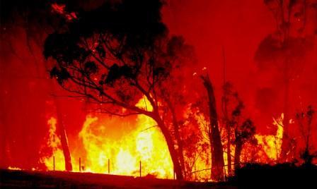 Fire sweeps across a paddock